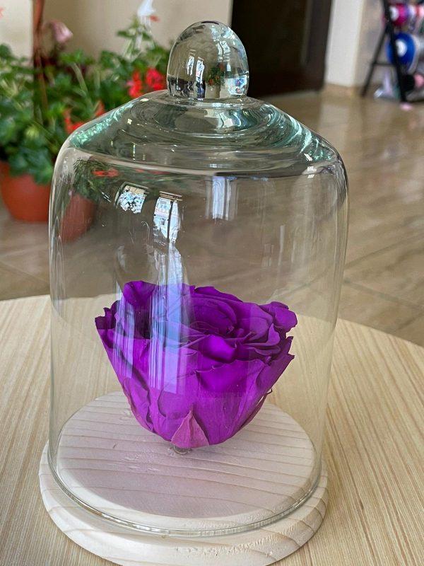 Trandafir criogenat cupola